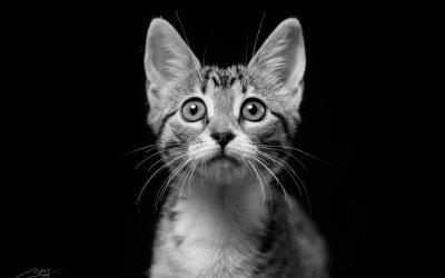 Fotografo de gatos en Alcoy – Nala Mestiza