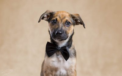 Fotografo de perros en Alcoy – Kurt Mestizo