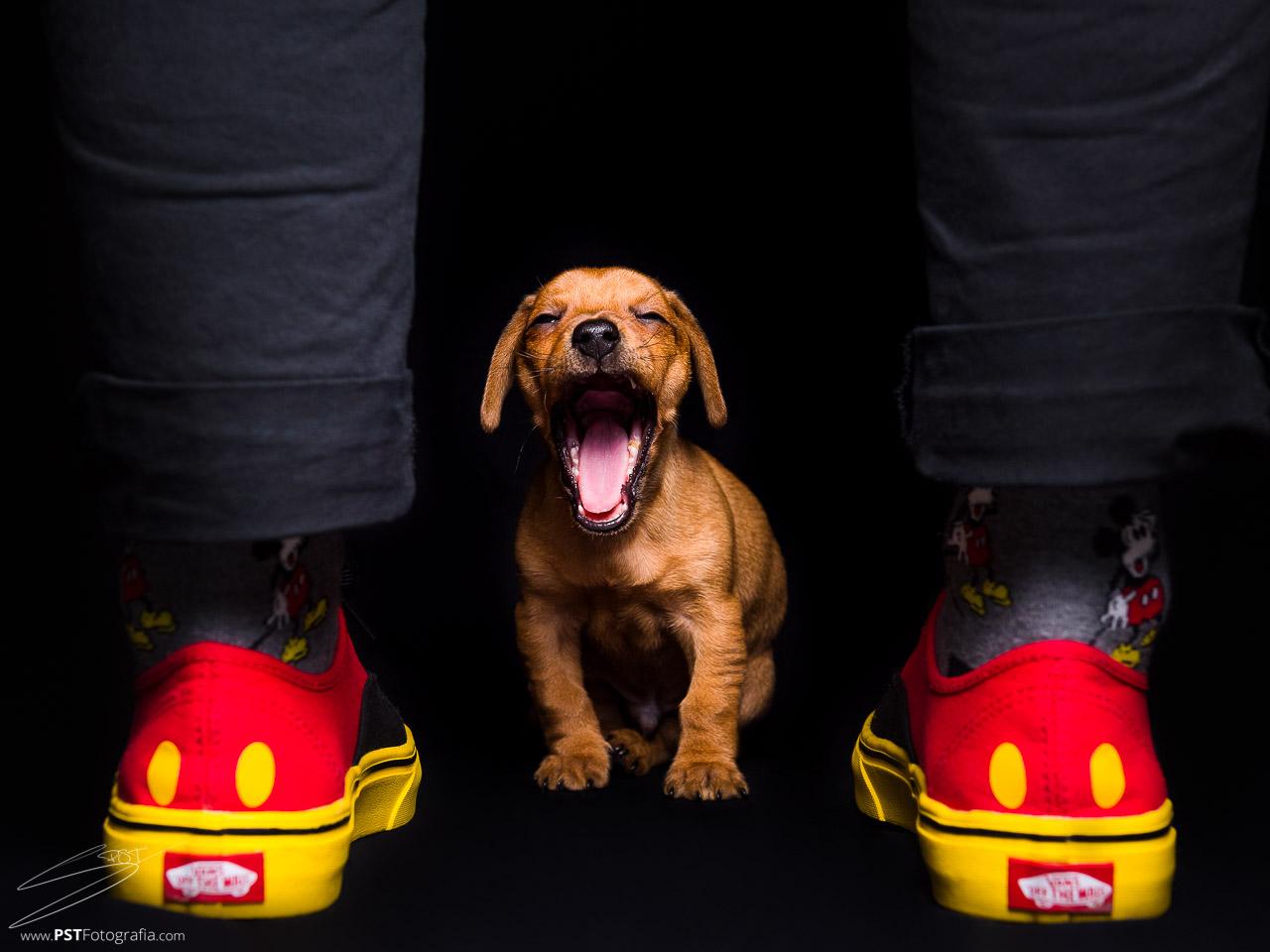 Fotógrafos de perros en Alicante