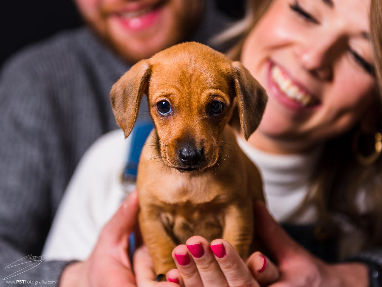 Fotógrafos de perros en Alcoy