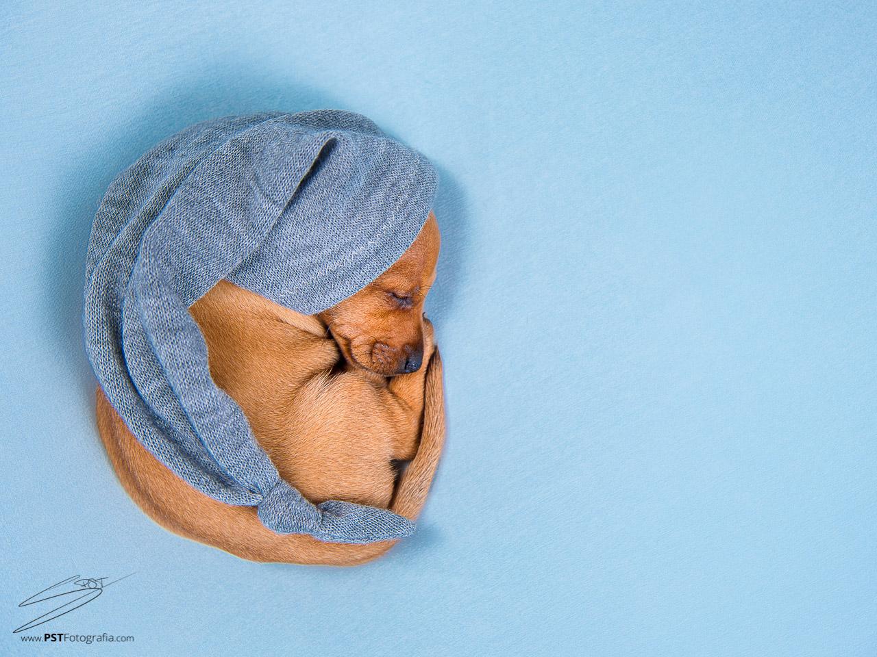 PSTFotografía - Fotografía de perros en Alcoy